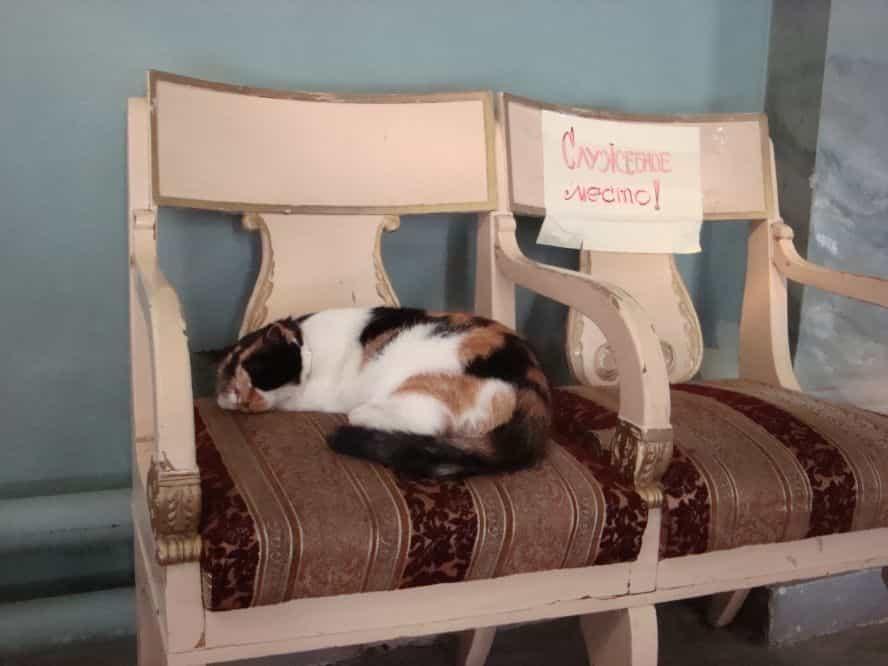 кошка в петропавловском соборе